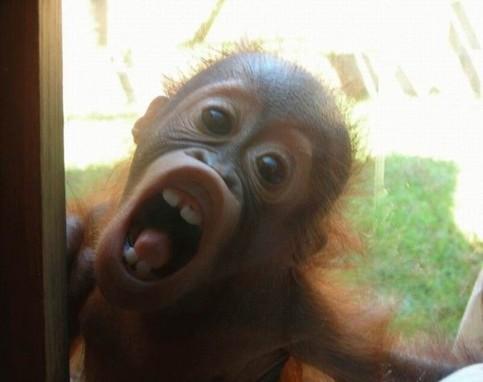 Ein Affe starrt durch ein Fenster und schneidet eine Grimasse.