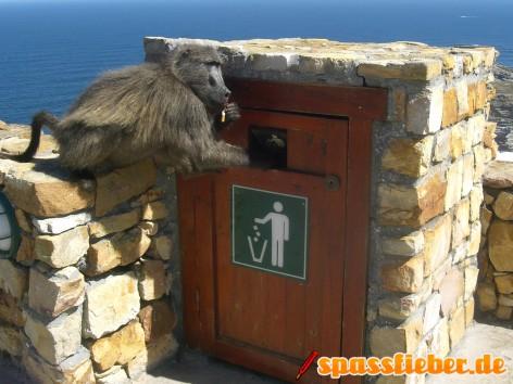 Ein Affe hat eine Zigarette aus einem Mülleimer geangelt und frisst diese.