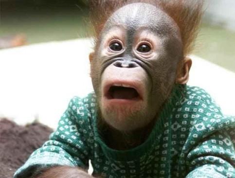 Ein Affe schaut sehr erstaunt.