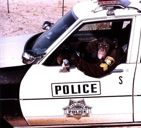 Ein Affe sitzt in Uniform in einem Streifenwagen.
