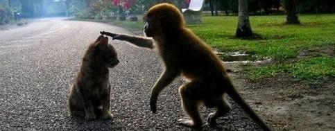 Ein Affe und eine Katze.