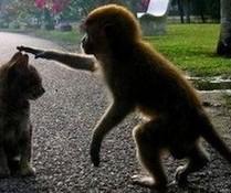 Katze und Affe