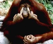 Frecher Affe