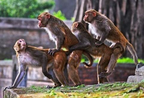 Vier Affen stehen hintereinander.