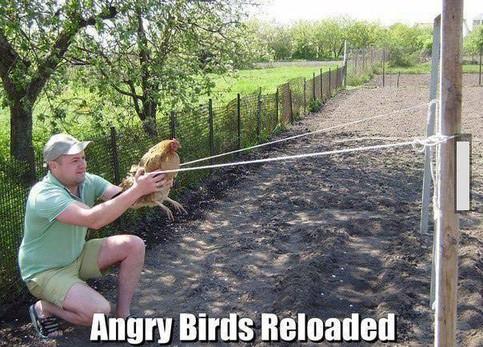 """Ein Mann spielt mit einem echten Huhn das Spiel """"Angry Birds"""" nach: Er spannt ein Huhn in eine Art Katapult ein."""