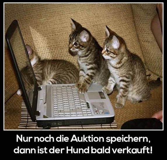"""Drei Katzen sitzen an einem Laptop. Dazu steht der Text: """"Nur noch die Auktion speichern, dann ist der Hund bald verkauft!"""""""