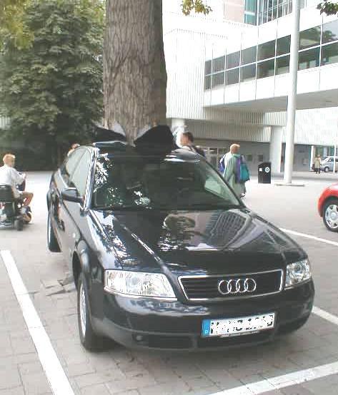 Ein Audi ist rückwärts auf einen Baum gefahren