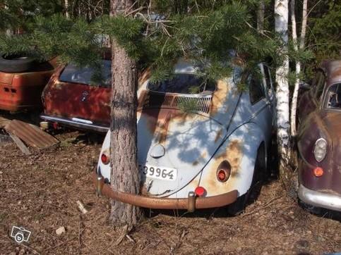 Ein VW Käfer steht so lange an einem Fleck, dass ein Baum durch ihn hindurch gewachsen ist.