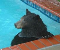 Bärenpool