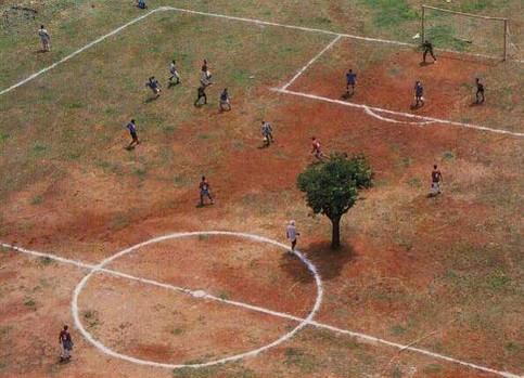 Ein Baum steht mitten auf einem Fußballplatz, wahrscheinlich in Afrika.