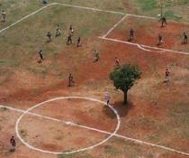 Fußballbaum