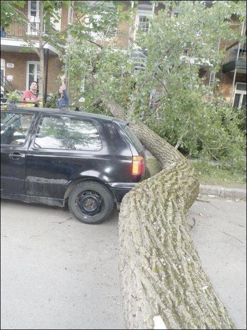 Ein Baum ist umgefallen. Er ist schief gewachsen und so gefallen, dass er ein Auto ganz knapp verfehlt hat.