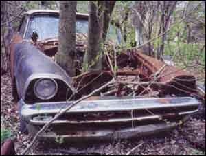 Ein Baum ist durch den Motorraum eines verrosteten Autos gewachsen