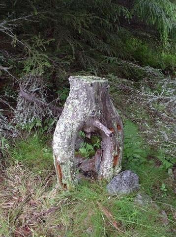 Ein Baumstamm, der aussieht wie ein männliches Glied.