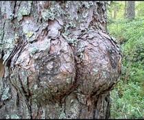 Naturbrüste