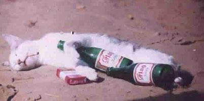 Eine besoffene Katze mit einer Flasche Bier und einer Schachtel Zigaretten.