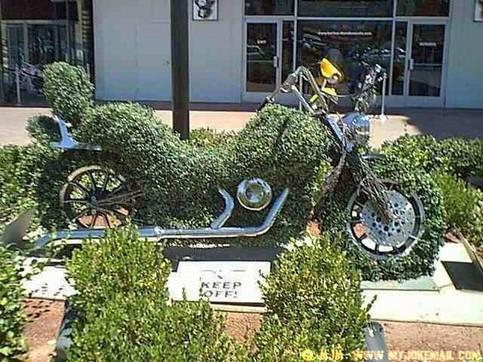 Ein Motorrad ist mit Efeu bewachsen.