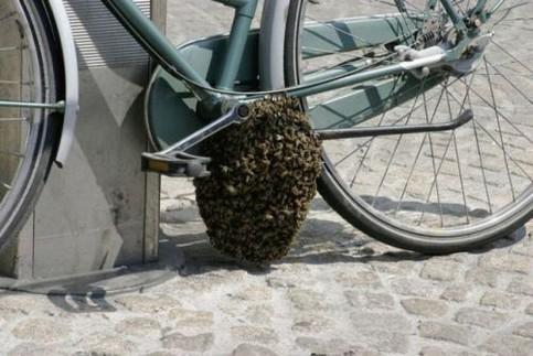 Ein Bienen- oder Wespennest wurde an einem Fahrrad gebaut.