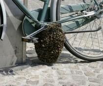 Fahrradwabe