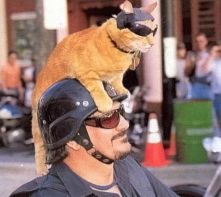 Eine Katze mit Sonnenbrille und Helm sitzt auf dem Helm eines Bikers, ebenfalls mit Sonnenbrille.