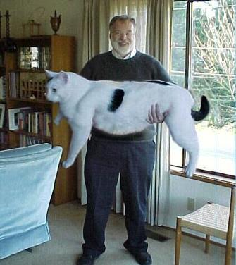 Ein Mann hält eine riesen Katze im Arm.