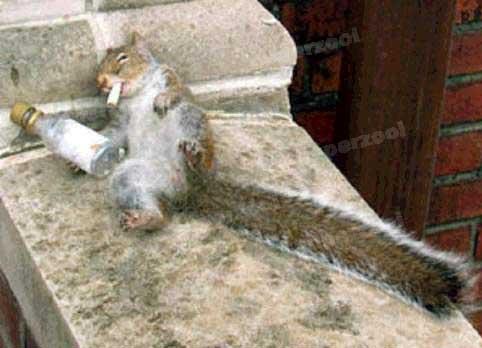 Ein besoffenes Eichhörnchen mit Zigarette im Maul.