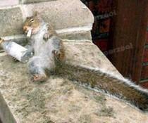 Drogenhörnchen