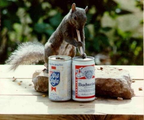 Ein Eichhörnchen trinkt mit einem Strohhalm Bier aus einer Dose.