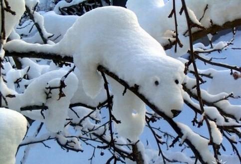 Schnee auf einem Ast ist so geformt, dass er aussieht wie ein Eisbär.