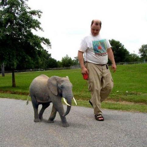 Ein kleiner Elefant wird an der Leine spazieren geführt.
