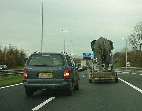 Ein Elefant auf einem Anhänger auf der Autobahn.
