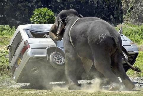 Ein Elefant zerquetscht und drückt ein Auto.