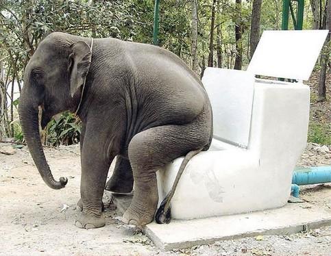 Ein großes Klo für Elefanten.