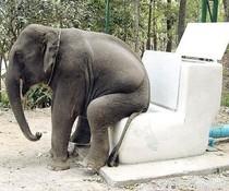 Elefantenklo
