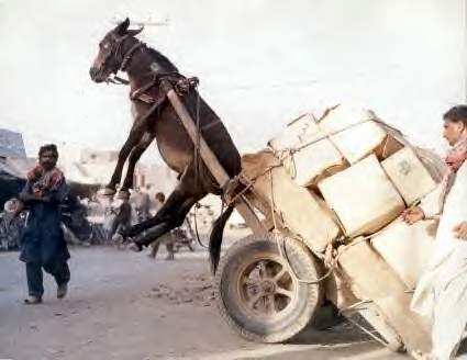 Ein Esel wird durch die Beladung eines Karrens in die Höhe gehoben.