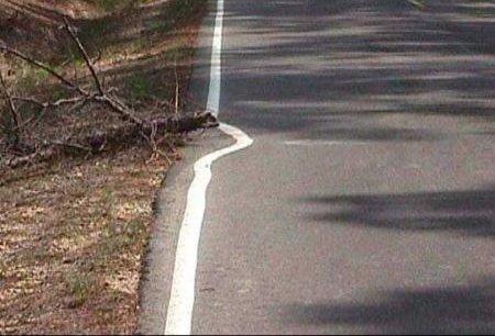 Ein Ast liegt auf einer Straße, die Fahrbahnmarkierung ist einmal um den Ast herum gemalt.