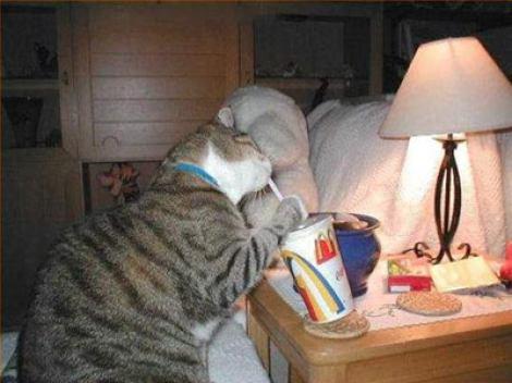 Eine Katze trinkt mit einem Strohhalm aus einem Fast Food-Getränkebecher.