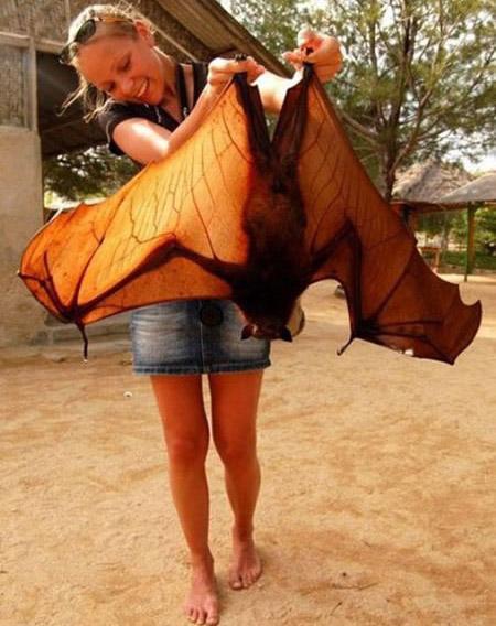 Eine junge Frau hält eine Riesen-Fledermaus in den Händen.