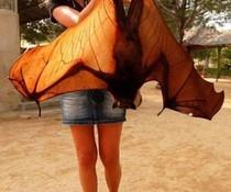 Riesen-Fledermaus