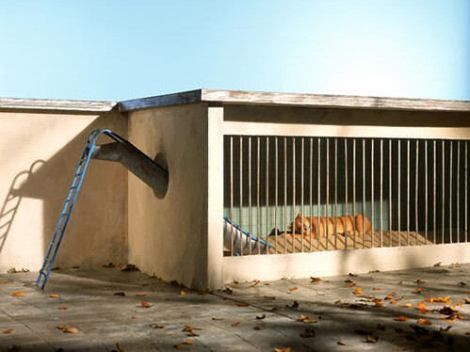 Eine Rutsche führt in einen Löwenkäfig.
