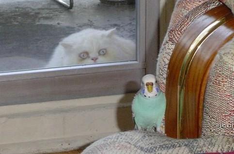 Eine fette Katze schaut gierig durch ein Fenster, hinter dem ein Vogel auf einem Sessel sitzt.