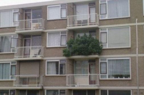 Ein Balkon ist komplett von Pflanzen überwuchert.