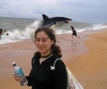 Hai auf Landgang
