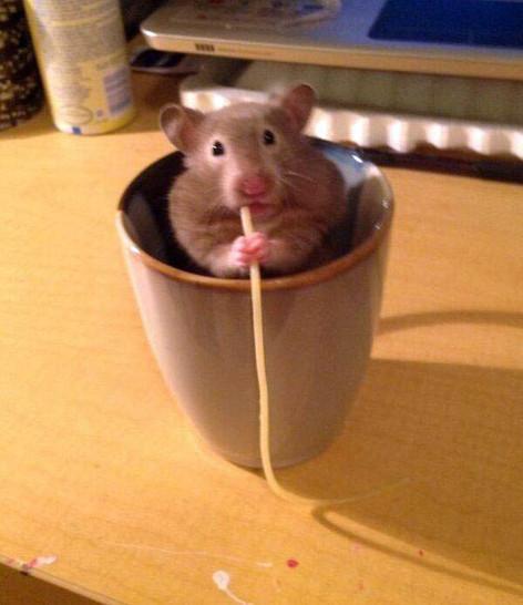Ein Hamster sitzt in einem Becher und knabbert an einer Spaghetti. Dabei schaut er frech in die Kamera.