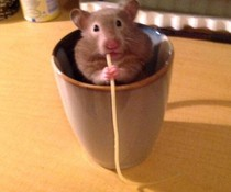 Hallo Hamster