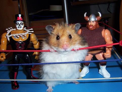 Ein Hamster steht mit zwei Spielfiguren in einem Catch-Ring.