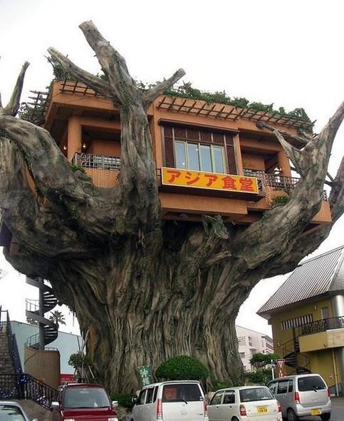 Ein Haus auf einem Baum in China.