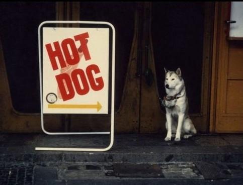 """Ein Schild """"Hot Dog"""" zeigt auf einen sitzenden Hund."""