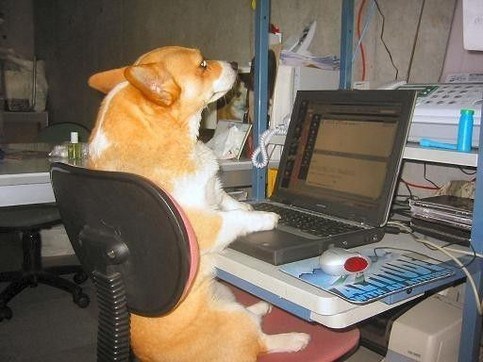 Ein Hund scheint an einem Computer zu arbeiten.