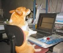 PC-Hund